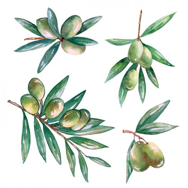 Декоративные оливковые ветви конструкции Бесплатные векторы