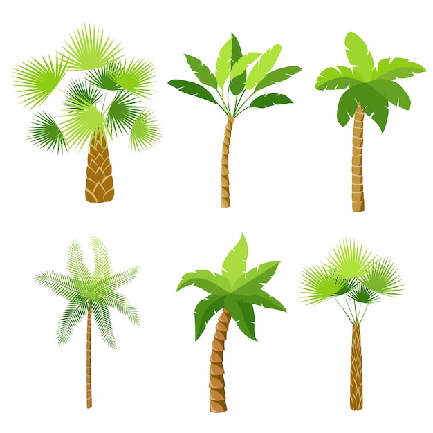 Decorative palm trees icons set isolated vector illustration Free Vector
