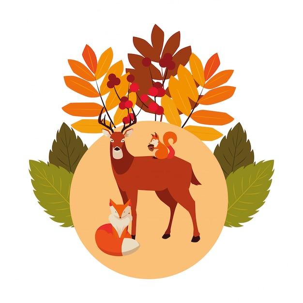 Deer fox and squirrel happy autumn season Premium Vector