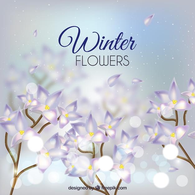 Defocused background of pretty winter\ flowers