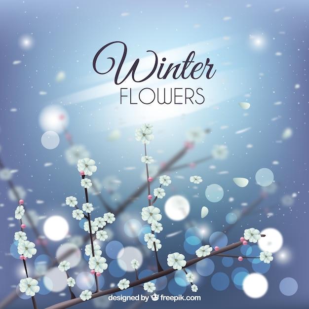 Defocused background of winter flowers