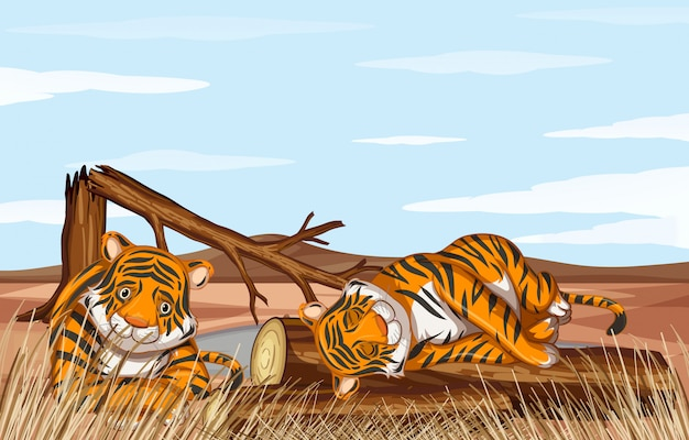 Deforestation scene with weak tigers Free Vector