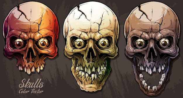 Detailed graphic colorful human skulls set Premium Vector