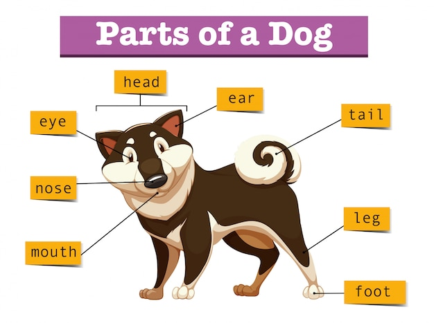 Diagram Showing Different Part Of Dog Vector
