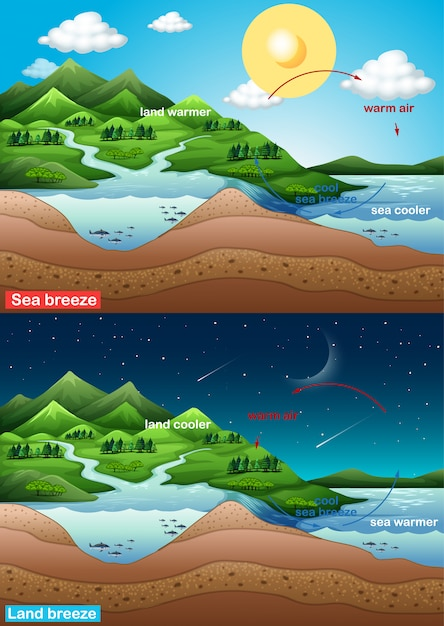 Diagram showing sea and land breeze Free Vector