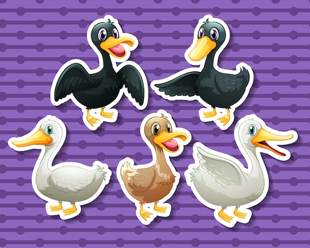 Different color of ducks Free Vector