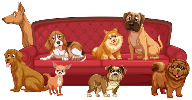 Different dog breeds at sofa Free Vector