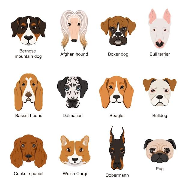 Different dogs Premium Vector