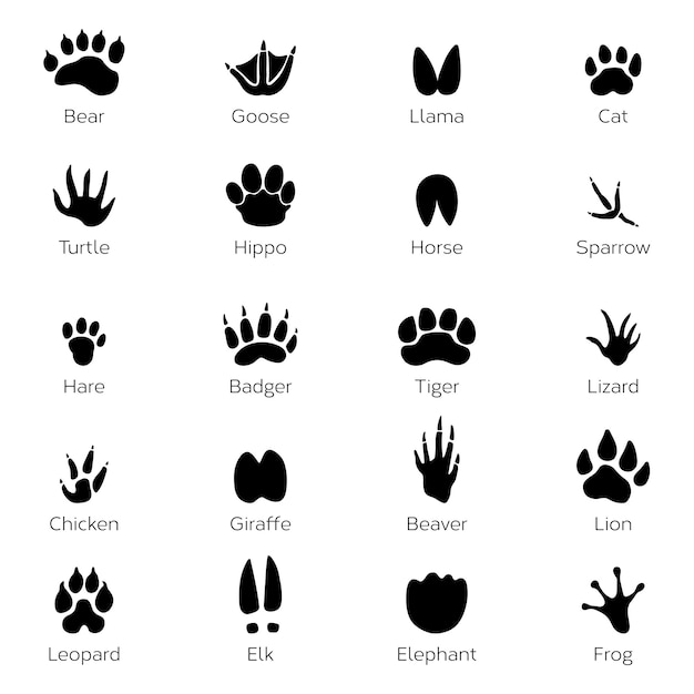 Different footprints of birds and animals. vector monochrome pictures on white background Premium Vector