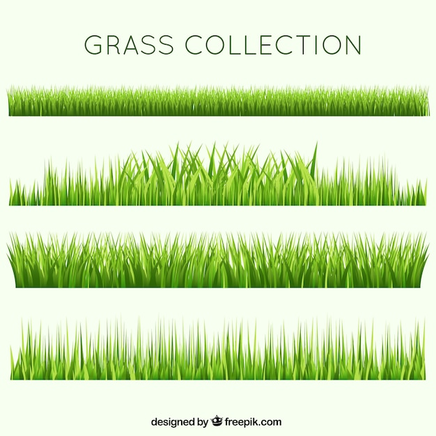 Different garden grass collection Free Vector