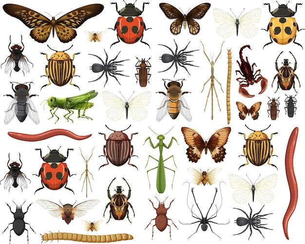 Коллекция различных насекомых, изолированные на белом фоне Бесплатные векторы