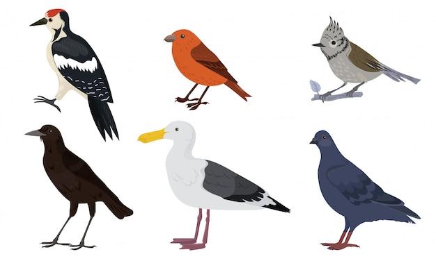 Different kinds of city birds vector illustration Premium Vector