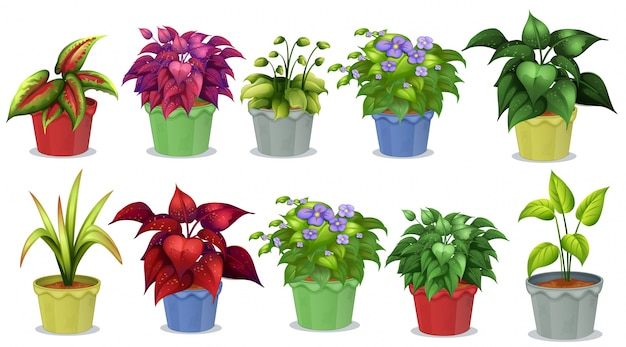 Different kinds of potted plants for gardening vector for Diferentes tipos de plantas ornamentales