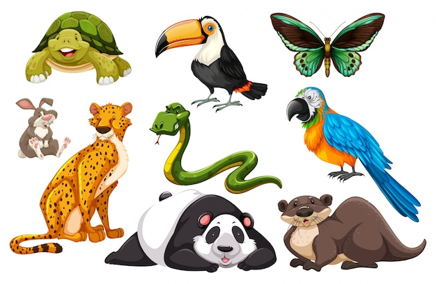Different kinds of wild animals\ illustration
