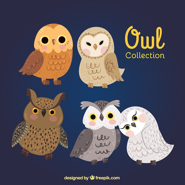 Different kinds of owls Free Vector