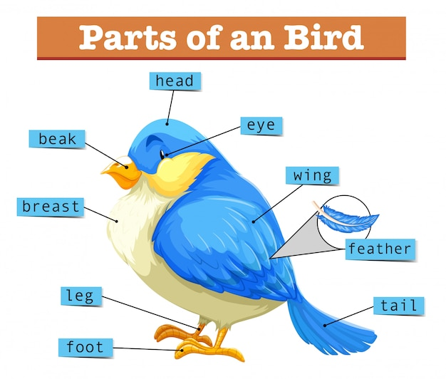 Different parts of little blue bird Free Vector