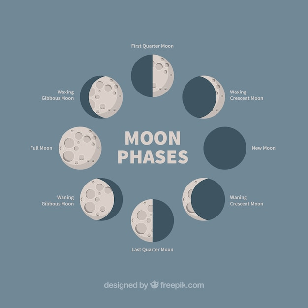 Different phases of the moon Free Vector