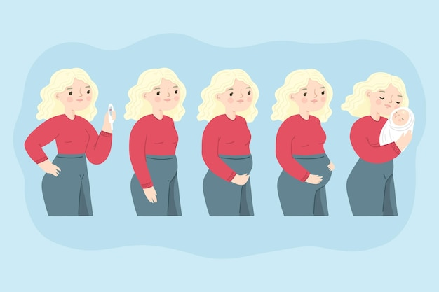 Diverse fasi della gravidanza illustrate Vettore gratuito