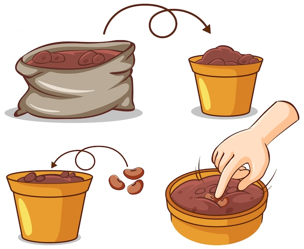 Different process of planting tree Free Vector