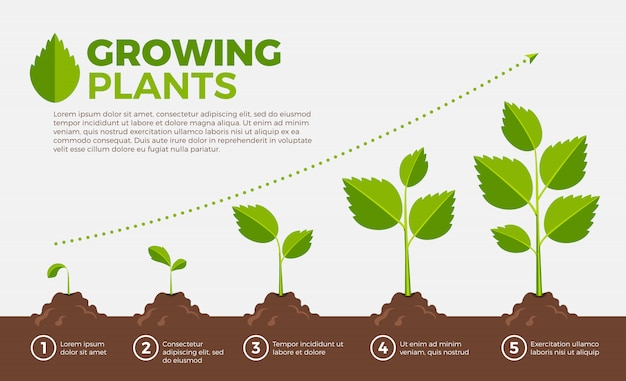 Different steps of growing plants. vector illustration in cartoon style. Premium Vector