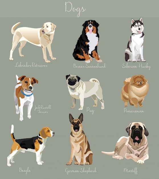 Different type of dogs set isolated Premium Vector