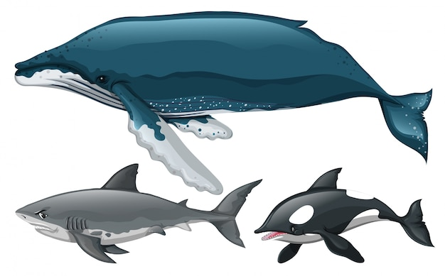 Different type of whale and shark illustration Free Vector