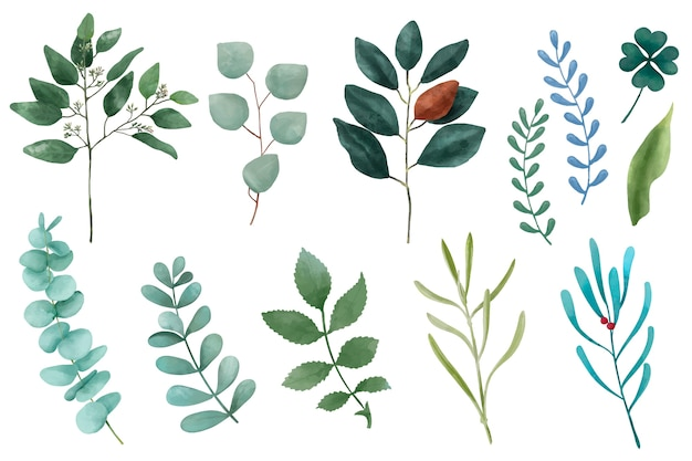 Different types of illustrated plant leaves isolated on white background. Free Vector