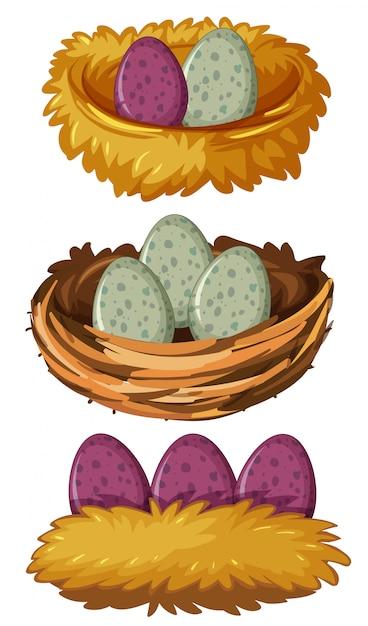 さまざまな種類の巣と卵 無料ベクター