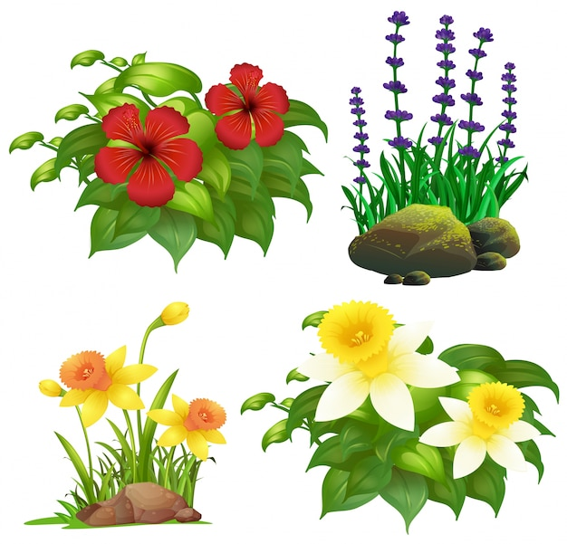 Diffe Types Of Tropical Flowers Free Vector
