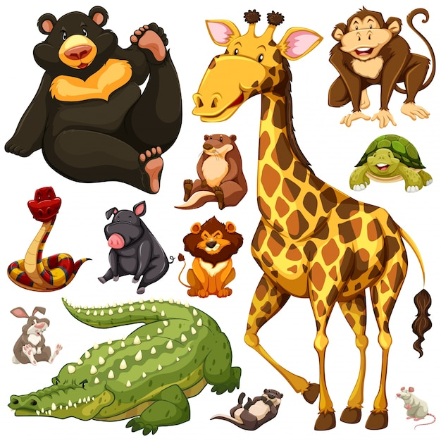 Different types of wild animals\ illustration