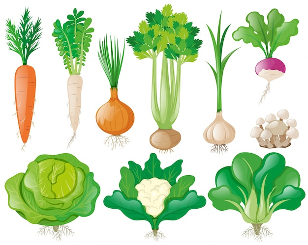 Different types of vegetables Free Vector