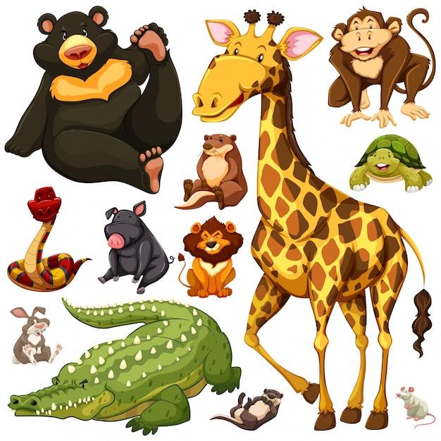 Different types of wild animals illustration Free Vector