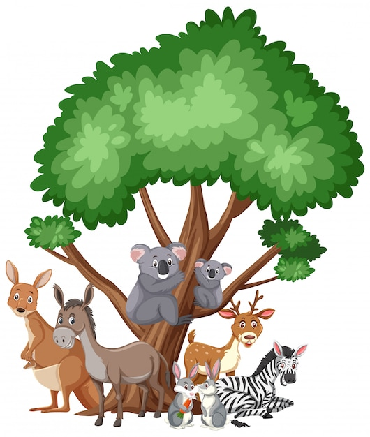 Different types of wild animals on white Premium Vector