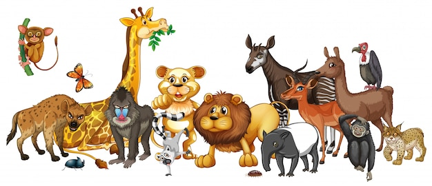 Different wild animals on white Free Vector