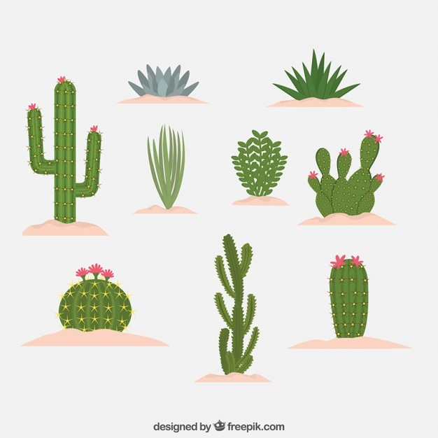 Differents kind of cactus design Premium Vector