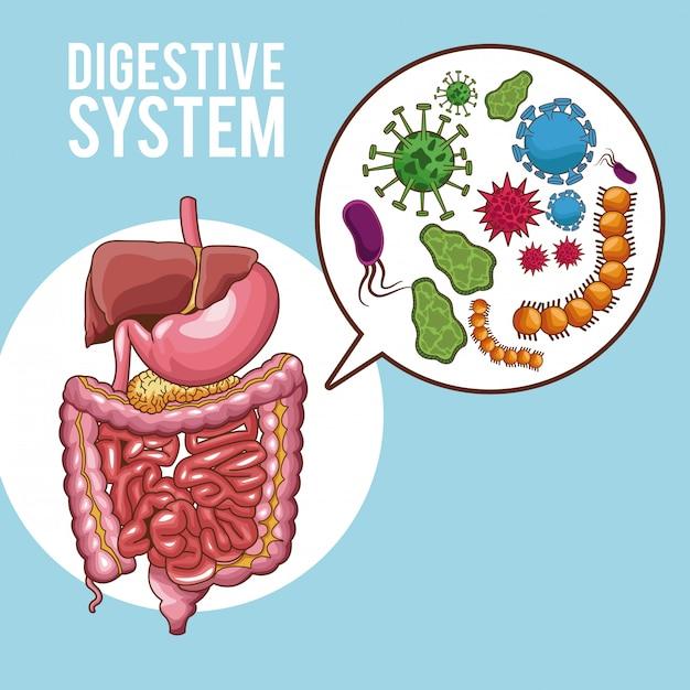 Digestive system human organs Premium Vector