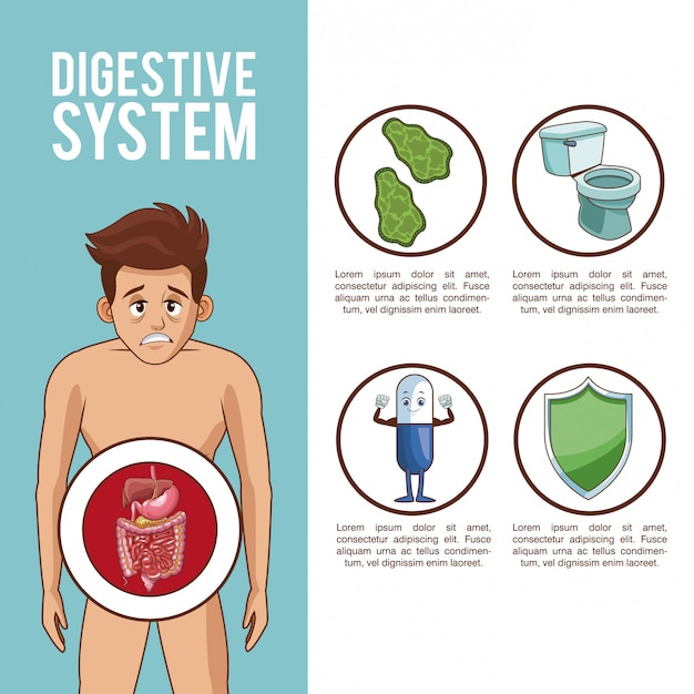 Digestive System Poster With Information Vector Premium Download