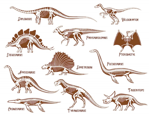 Set di scheletri di dinosauri Vettore gratuito