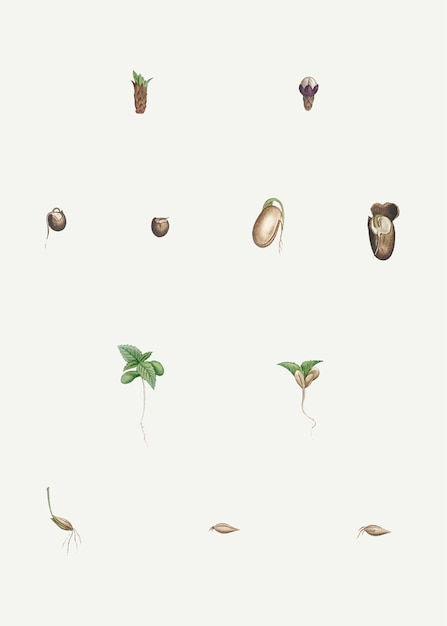 Dissected plants Free Vector