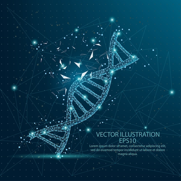 Dna form low poly wire frame on blue background. Premium Vector