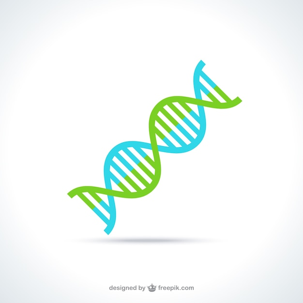 DNA molecule structure Free Vector