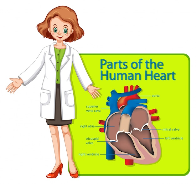 Doctor And Poster Showing Parts Of Human Heart Vector Premium Download