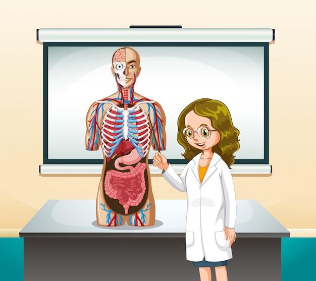 Medico e modello umano in classe Vettore gratuito
