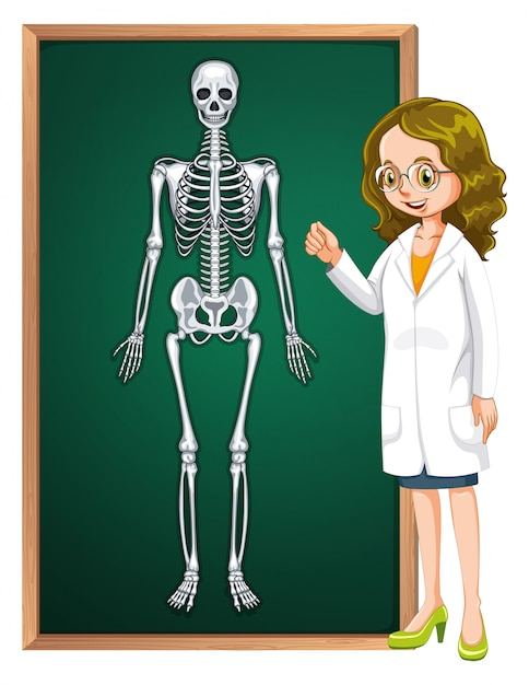 Doctor and human skeleton on board Free Vector