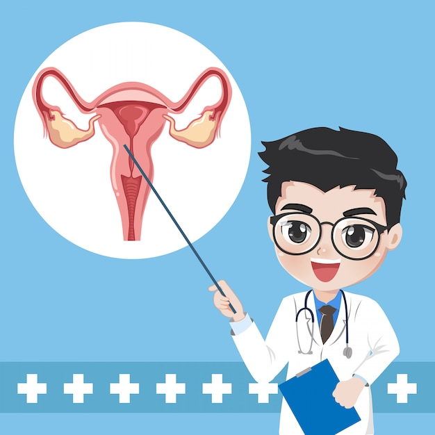 Doctor teaches give knowledge system human uterus. Premium Vector