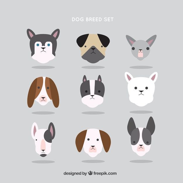 Dog breed collection in flat design