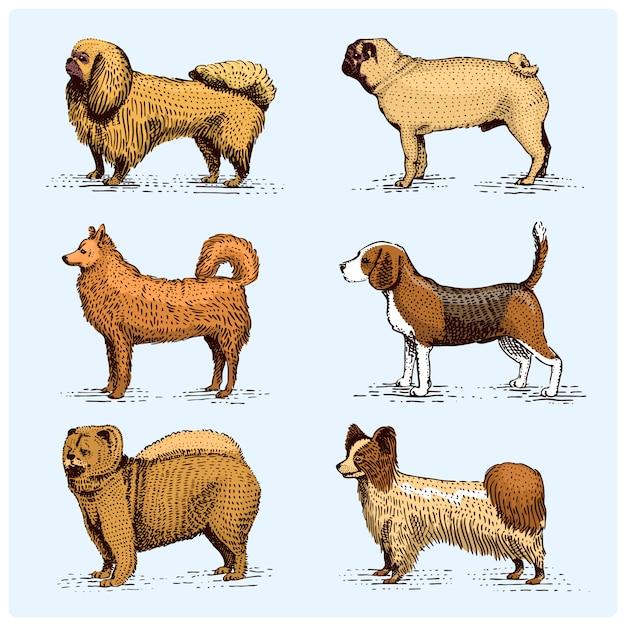 Выгравированные породы собак, нарисованная рукой иллюстрация в стиле scrapbook woodcut, винтажные виды чертежа. мопс и сеттер, пудель со шпилем, спрингер спаниель, гончая гончая доберман, пастух. Premium векторы