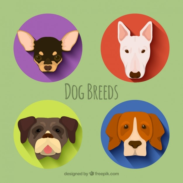 Dog breeds pack Free Vector