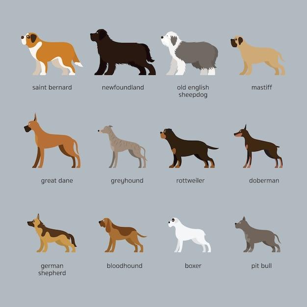 개 품종 세트, 거대 및 대형, 측면도 프리미엄 벡터