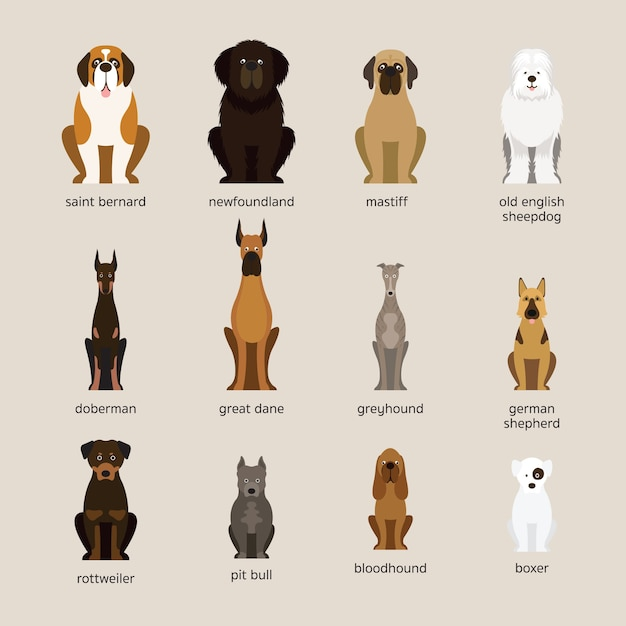 Dog breeds set, giant and large size, front view Premium Vector